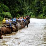 olifant reis op onze afkickkliniek